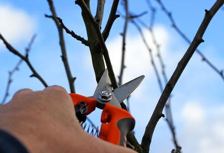 Tree pruning.