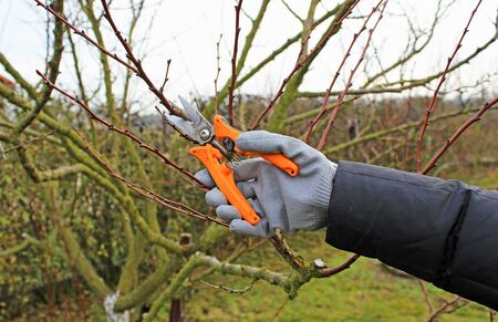 Pruning trees by pruning shears