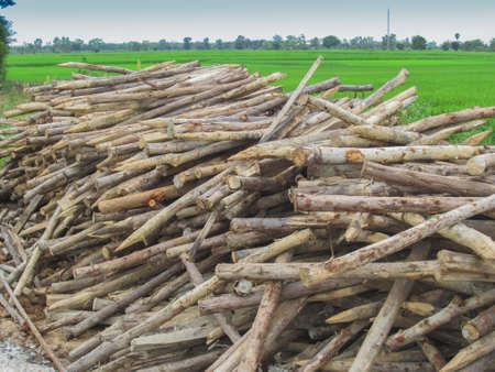 Stacks of eucalyptus wood for use in formwork bracing. 版權商用圖片