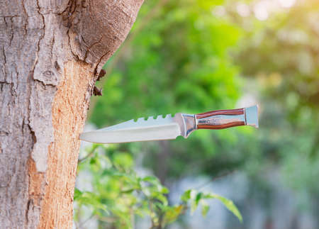 The hunting knife stuck in the tree on out of focus background.