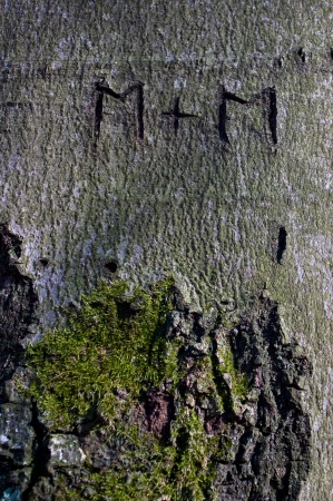 Monogram etched into the bark of an old tree  photo
