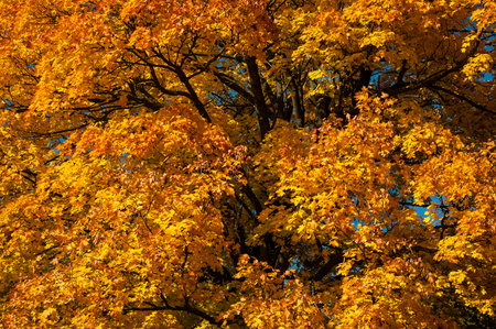 autumn color: In autumn the leaves change color of trees and shrubs in beautiful colors.