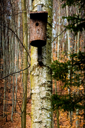 Placed dwelling birds on a tree in the woods. Stock Photo
