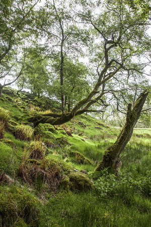 uplands: Spring in green forest full of light, stones and moss in Uplands, Scotland