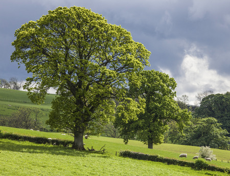 lowlands: Trees over the meadow in Lowlands, Scotland