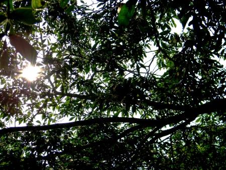 明るい太陽の下 写真素材