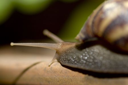 hermaphrodite: Snails Stock Photo