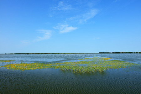 wetlands: beautiful wetlands scenery