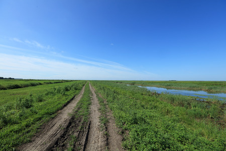 wetlands: wetlands scenery