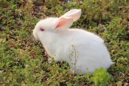 Rabbit mammals