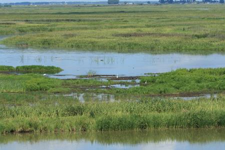 Yanwodao wetland