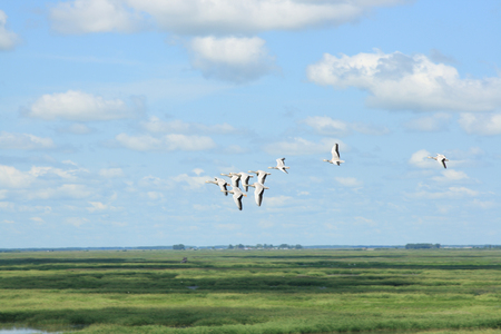 View of a group of bird flying in the sky above the lake Stock Photo