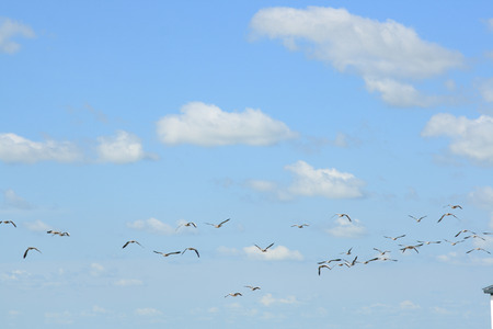 View of a group of bird flying in the sky