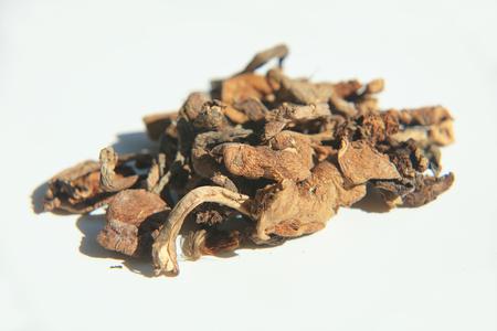 Agaricus subrufescens Stok Fotoğraf - 106140455
