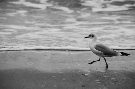 seagull on the seashore beach