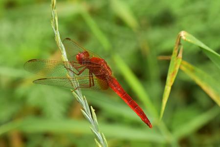striker: dragonfly