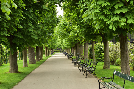 Benches for rest. The pedestrian road. Beautiful green plantations.