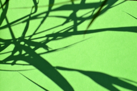 shadows grass photo