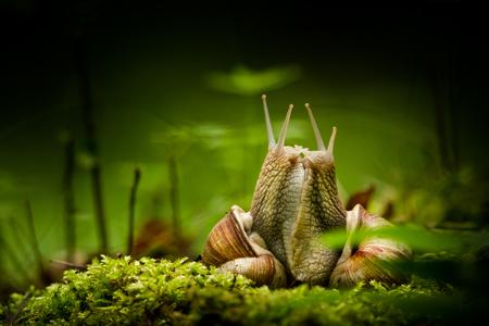 Snail lovers Banco de Imagens
