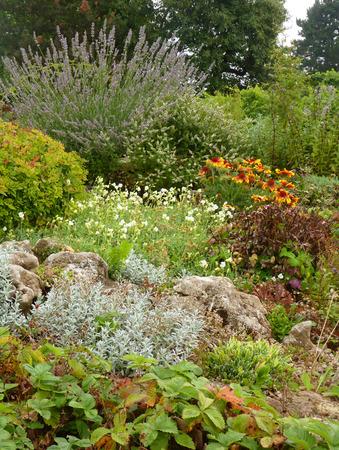Fleur de rocaille de rocaille avec lavande fleurie et des plantes rocheuses alpine Banque d'images - 84394287