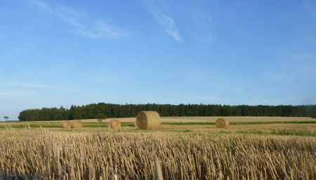 hayroll: Hay straw bales on the stubble field with blue sky and forest in background. Stock Photo