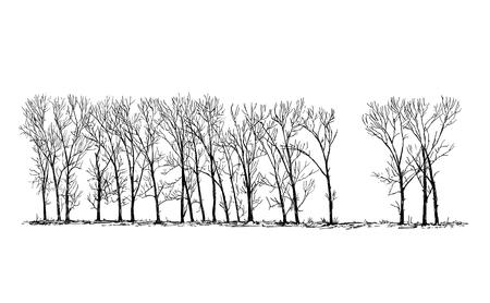 Vector de dibujos animados doodle dibujo ilustración del grupo o callejón de álamo latifoliado o caducifolio en el horizonte lejano en invierno. Ilustración de vector