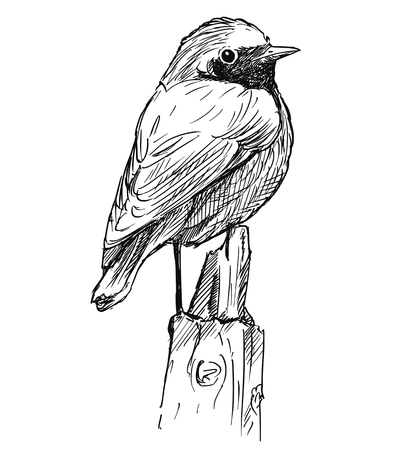 Vector artistic pen and ink hand drawing of small bird common redstart sitting on top of pole.