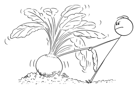 Vector cartoon stick figure drawing conceptual illustration of farmer or gardener trying to pull out giant or big beet.