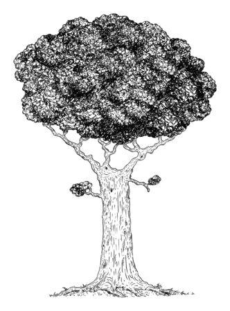 Vector carton digital pen and ink illustration of broadleaved tree. Çizim