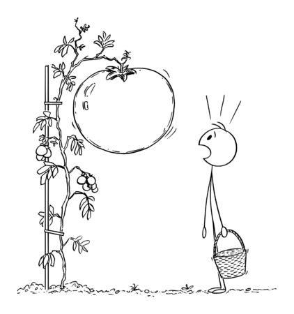 Vector cartoon stick figure drawing conceptual illustration of man or farmer with basket, surprised by big or giant tomato growing on plant on his garden or farm.