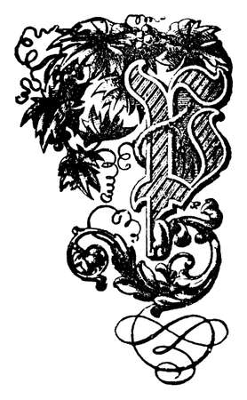 Decorative floral ornamental capital letter P. Vintage engraving or line drawing illustration.