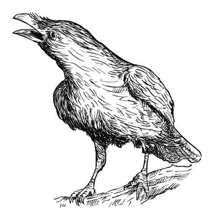 Black Common Raven Bird. Vector Drawing or Illustration