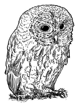 Tawny or Brown Owl Bird. Vector Drawing or Illustration Banco de Imagens - 166466633