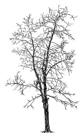 Tree Winter Silhouette, Vector Drawing or Illustration