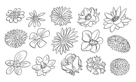 Flowers Set, Sketchy Cartoon Hand Drawing, Black and White
