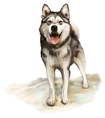 Painting Nordic dog Alaskan Malamute Stock Photo - 25366516