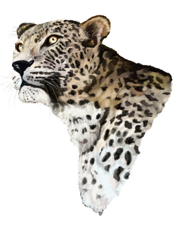 poacher: Painting Jaguar head and chest on white background