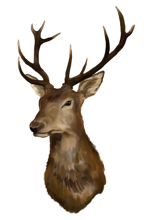 Painting Deer head on a white background