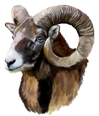 Painting Mouflon head Stock Photo