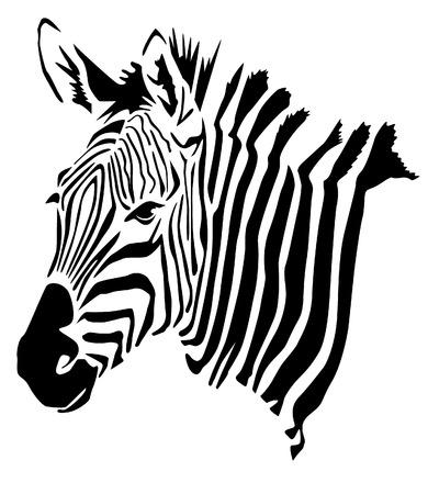 Zebra Head - Hippotigris
