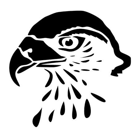 buzzard: Head predator - buzzard - drawing