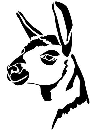 Kopf Lamas - Mammalia