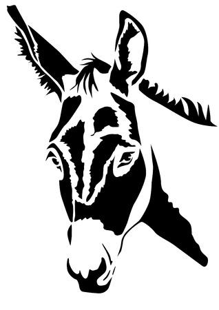 Kopf Esel - Asinus Standard-Bild - 38492877