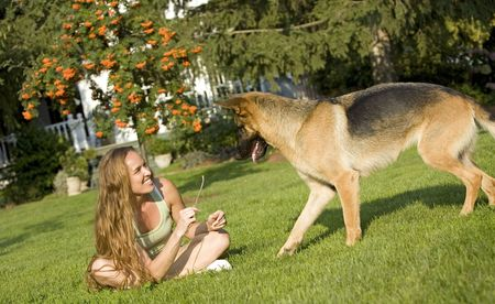 pretty brunette model playing with her german sheppard photo