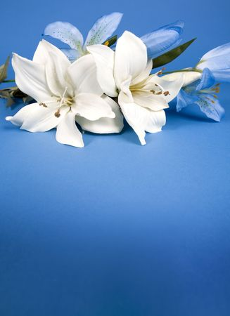 white artificial lilly flower on the blue background