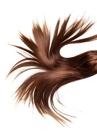 human brown hair on white isolated background photo