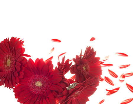 red flowers together on white isolated background