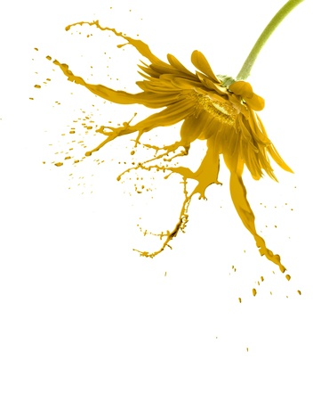 yellow flower with paint splash on white isolated background photo