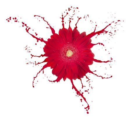 Fiore rosso con la vernice spruzzata su sfondo bianco isolato Archivio Fotografico - 12908115