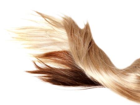 textura pelo: humana de color marr�n y pelo rubio sobre fondo blanco aisladas